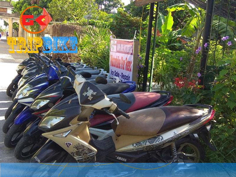 Thuê xe máy Long An tại Tp. Tân An – Ánh Hồng